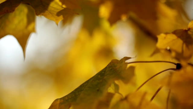 yellow green leaves on tree branch video