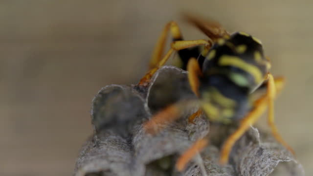 желтый жакет пчелиное гнездо на - жакет стоковые видео и кадры b-roll