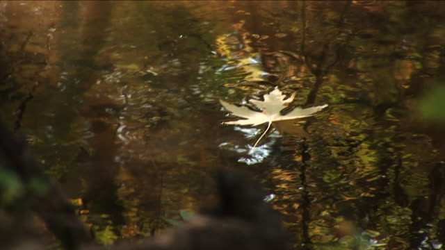 Yellow leaf floating - part 3 of three video