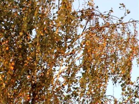 foglia gialla in autunno - parte della pianta video stock e b–roll