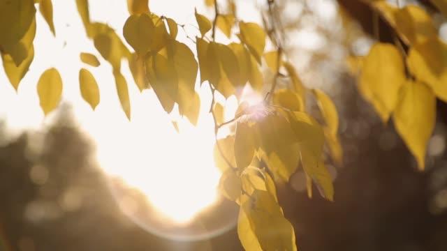 vídeos de stock, filmes e b-roll de amarelo folhas ao vento - setembro amarelo