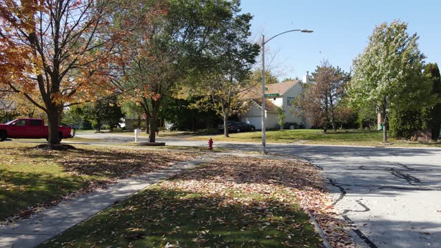 Yellow leaves falling. Autumn street an american suburban neighborhood, sidewalk covered in colorful yellow leaves