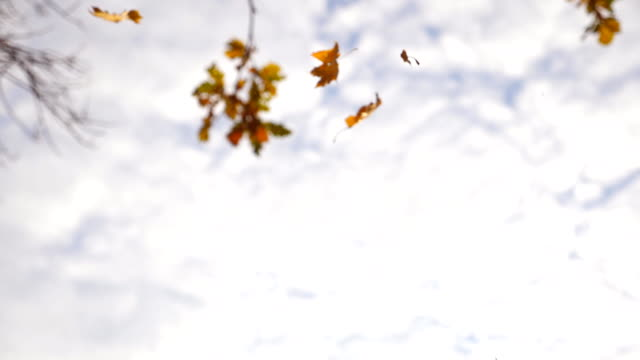 Yellow leaves falling in autumn park. Beautiful landscape background. Colorful fall season. Slow motion Close up