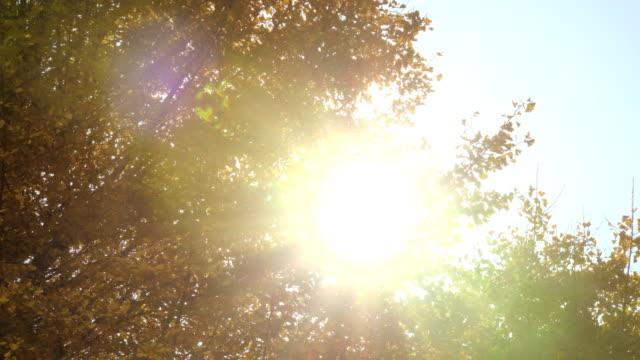 黃色銀杏葉中的陽光 - 銀杏樹 個影片檔及 b 捲影像