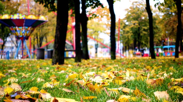 yellow leaves on a green grass at the autumn park video