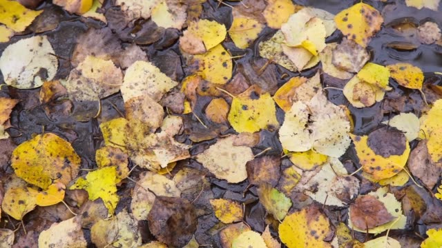 Yellow leaves on the ground video