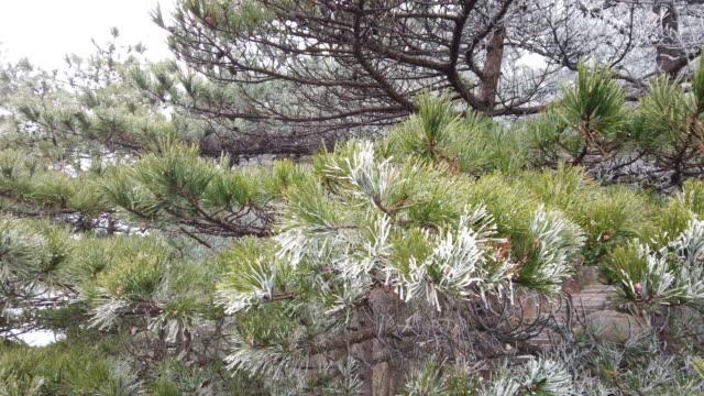 kar ve pul çam ağacı ile 4k sarı dağ kış, huangshan, çin - unesco stok videoları ve detay görüntü çekimi