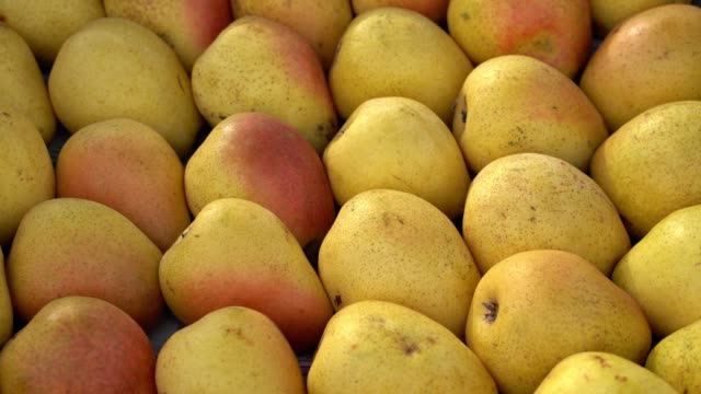 Yellow pears harvest top view. Many rows with pears pear stock videos & royalty-free footage