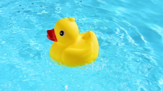 A yellow rubber duck can drift relaxed on the sparkling and crystal-clear water of a pool in the summer light