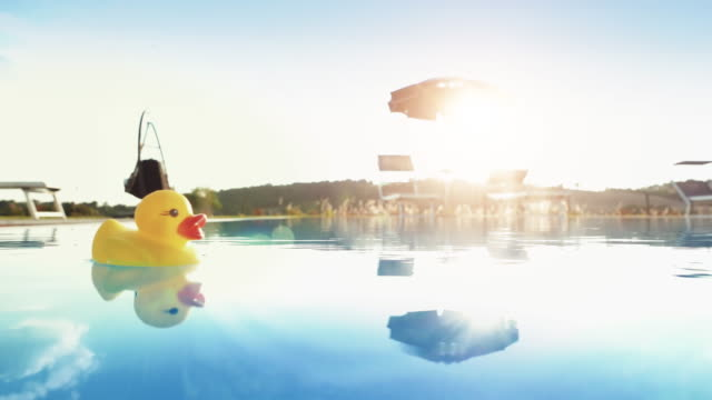 Yellow rubber duck floating in a swimming pool
