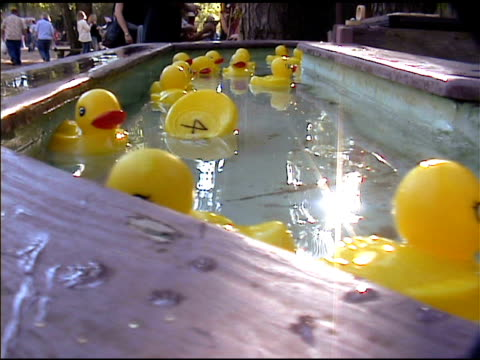 Yellow Rubber Duckies Floating by in Water 2 video