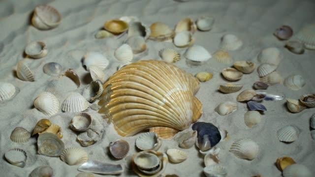 Gelbe Schale und kleinen Muscheln im Sand – Video