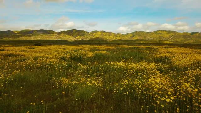 vídeos y material grabado en eventos de stock de amarillo super bloom california aerial - flor silvestre
