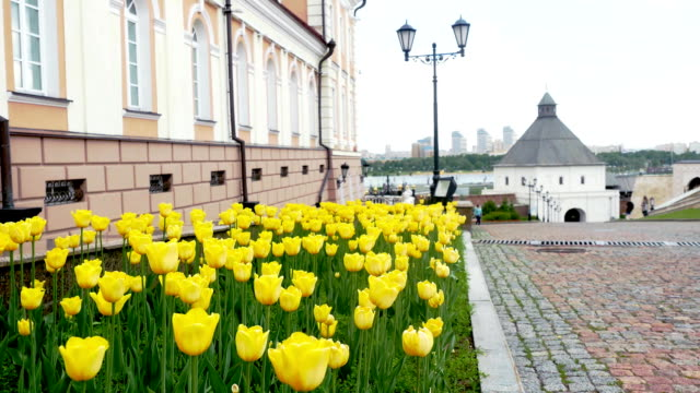 Yellow tulips in Springtime in a Square. 3840x2160, FullHD video