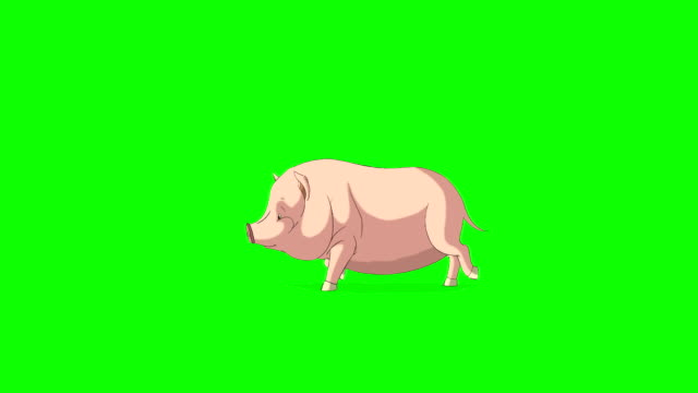 stockvideo's en b-roll-footage met geel-roze kleine varken runs chromakey - pig farm