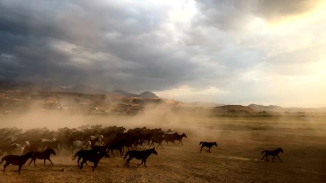 vídeos de stock, filmes e b-roll de yilki cavalos correndo - manada