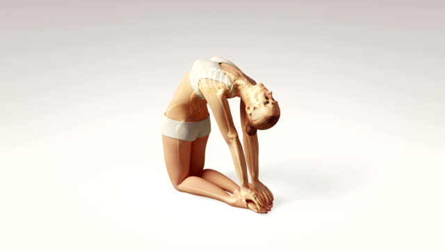 Yoga Camel Pose Of Stretching Female With Visible Skeleton video