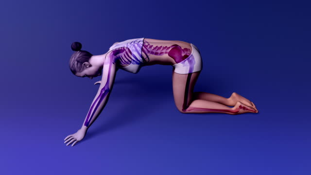 Yoga Cat Pose Of A Female With Visible Skeleton video
