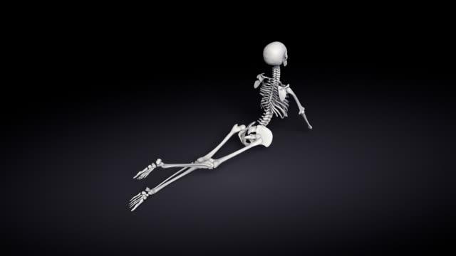 Yoga Cobra Pose Of Human Skeletal video
