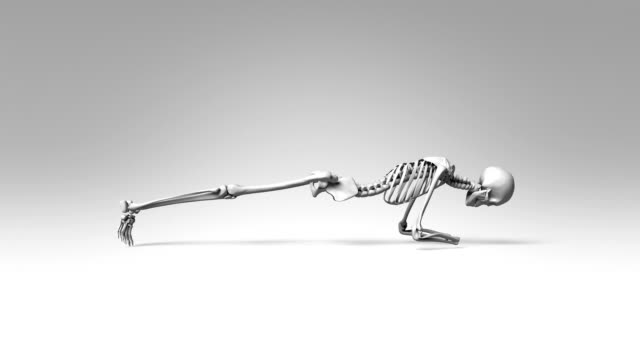Yoga Dolphin Plank Pose Of Human Skeletal video