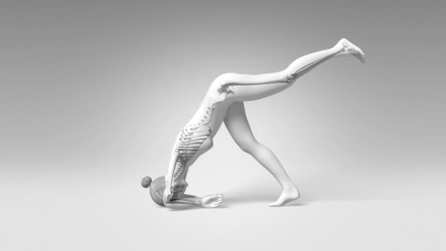 Yoga Dolphin Pose Of Stretching Female With Visible Skeleton video