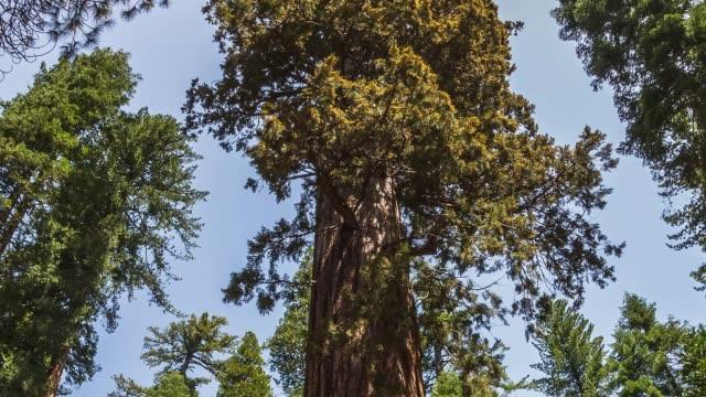 Yosemite National Park Nature, Landscape Hyperlapse Timelapse Giant Sequioa