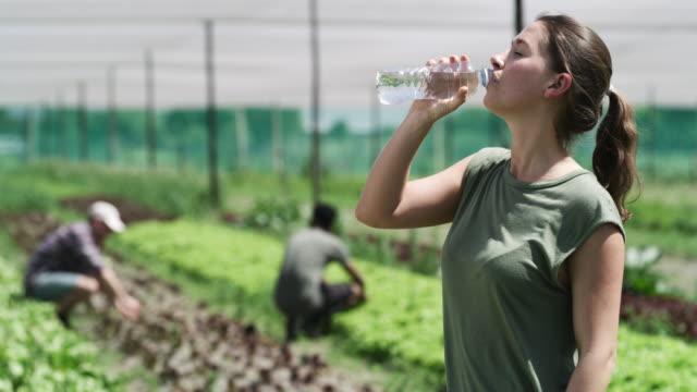 vídeos de stock e filmes b-roll de you can work up quite a sweat on a farm - agricultora