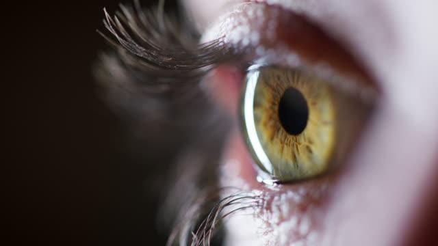 vidéos et rushes de vous trouverez une forêt inflexible dans ses yeux - rétine