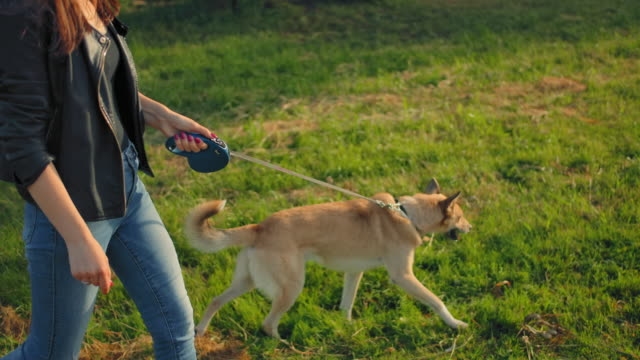 A young 20 years old female leading her dog for a walk in the park on a leash