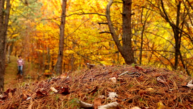 Young Active female with backpack have a walk in autumn forest video