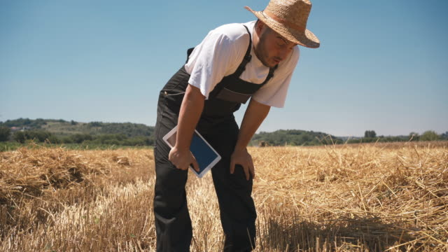 Young adult male farmer resting in wheat field