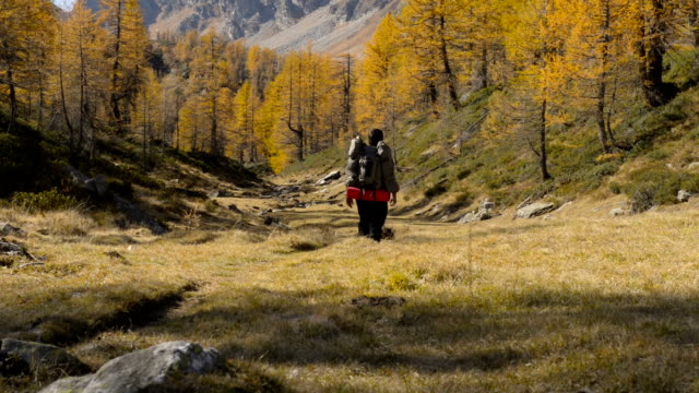 Young adult man trekking on mountain path in sunny autumn day outdoor video