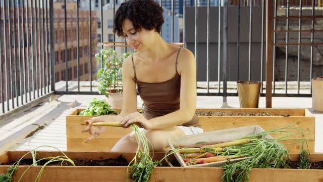 young adult woman kommissionierung karotten auf dachgarten - dachgarten videos stock-videos und b-roll-filmmaterial