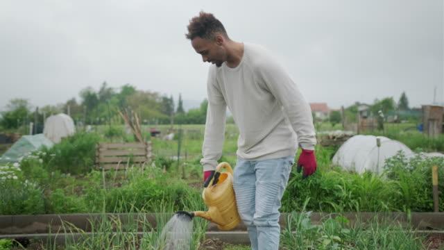 junge afroamerikanische erwachsene arbeiten im gemüsegarten - urban gardening stock-videos und b-roll-filmmaterial