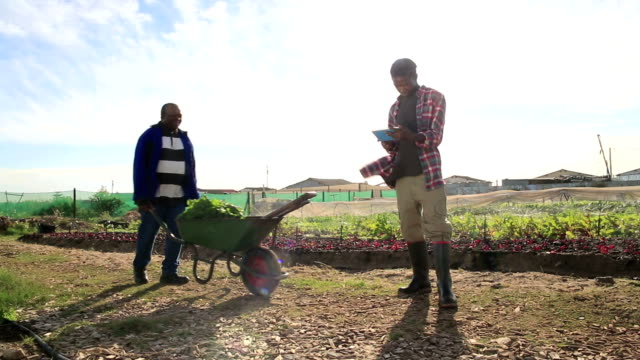 Young African Organic Farmer using New Technology video