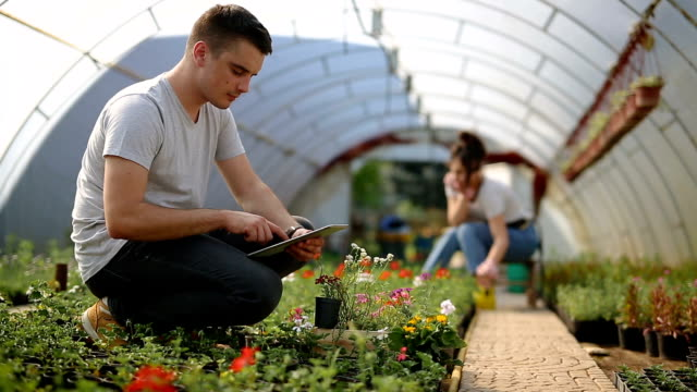 young agricultural expert in greenhouse - ассистент стоковые видео и кадры b-roll