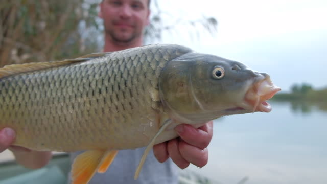 junger angler hält großen fisch - fang stock-videos und b-roll-filmmaterial