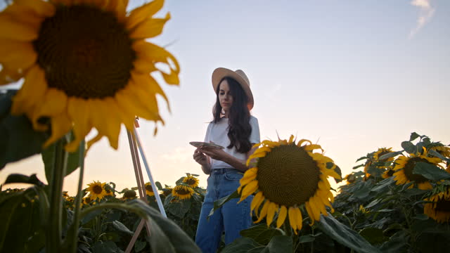 SLOW MOTION Young artist enjoy painting in the middle of sunflower field