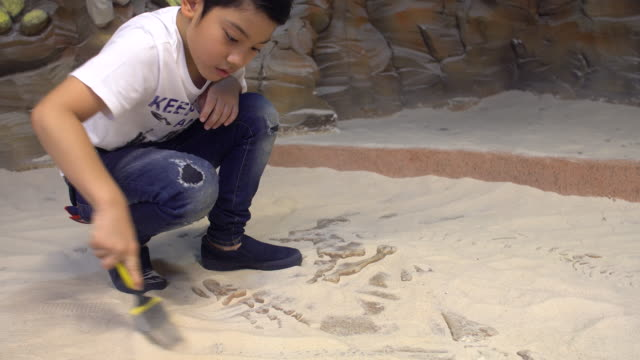 young asian boy playing in the sandbox at dinosaurs museum - dinosaur stock videos and b-roll footage
