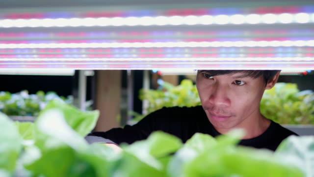 vídeos de stock, filmes e b-roll de jovem asiática verifique sua fazenda de cultivo de vegetais hidropônico orgânico, fazenda de interior vegetal verde hidropônico orgânico da salada. - agricultura
