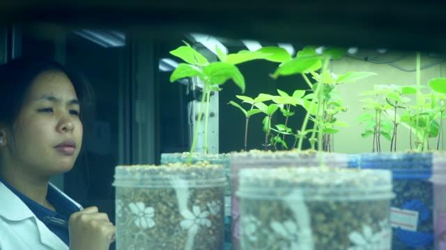 genç asyalı bilim adamı organik sebze kontrol - plant stem stok videoları ve detay görüntü çekimi