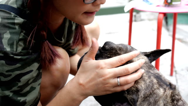 Young Asian woman feed food to french bulldog. video