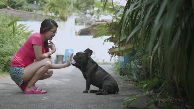 stockvideo's en b-roll-footage met jonge aziatische vrouw met speelse franse bulldog. concept: opleiding, huisdier. - teenager animal