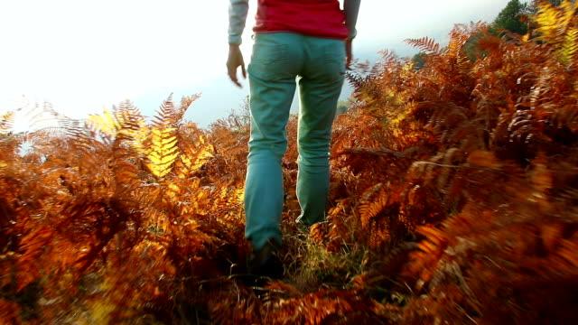 young atractive tourist woman hikes  through mountain fern fall forest - attività equestre ricreativa video stock e b–roll