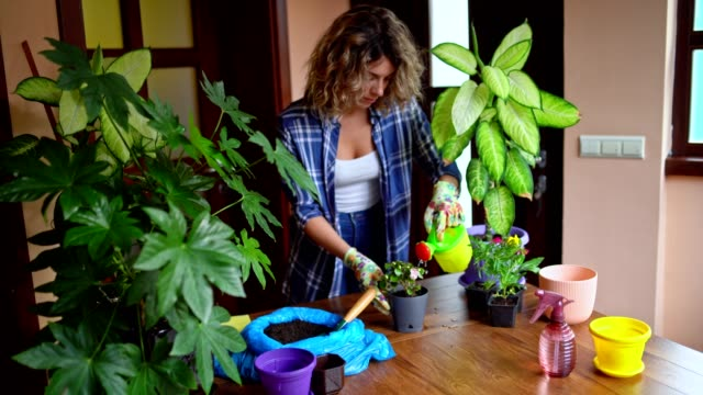 Young Attractive Woman is Watering plants in Her Home
