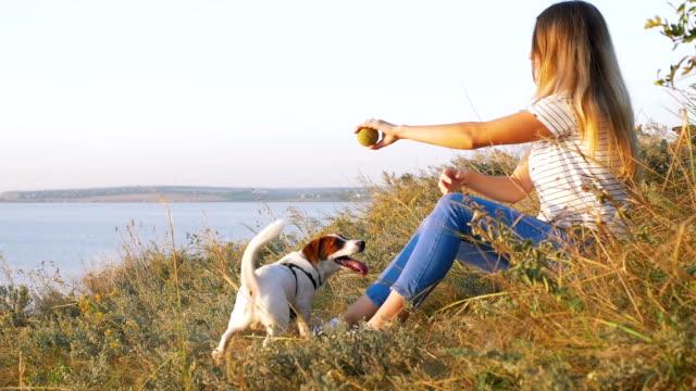 夕暮れの海の背景草原の犬ジャック ラッセルと遊ぶ若い魅力的な女性。スローモーション ビデオ