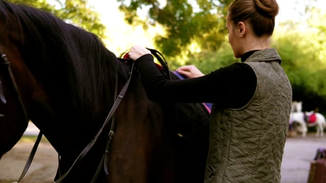 Young attractive woman preparing dark brown horse for a dressage ride training. Woman placing a pad blanket and saddle gently on horse's back video