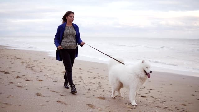 Young attractive woman walking with samoyed dog on the sand by the sea. Slowmotion shot video