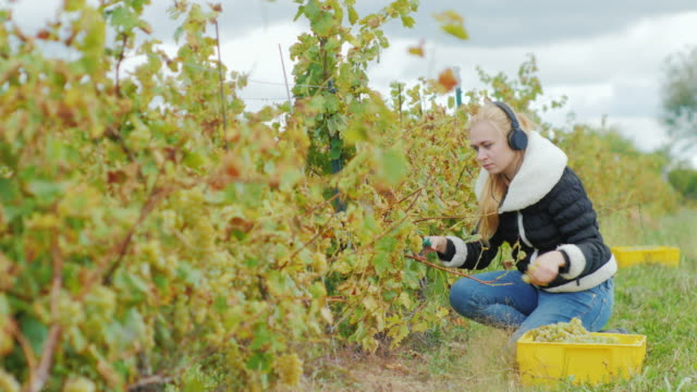 Young attractive woman with scissors cuts the vines, listening to music on headphones video