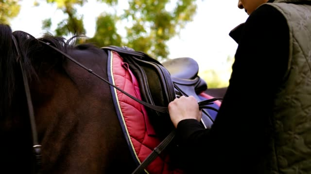 Young beautiful female rider puts a saddle on her horse and prepares animal for dressage, tying up leather strap of saddle video